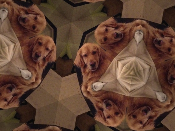 Trippy Dogs are Trippy.